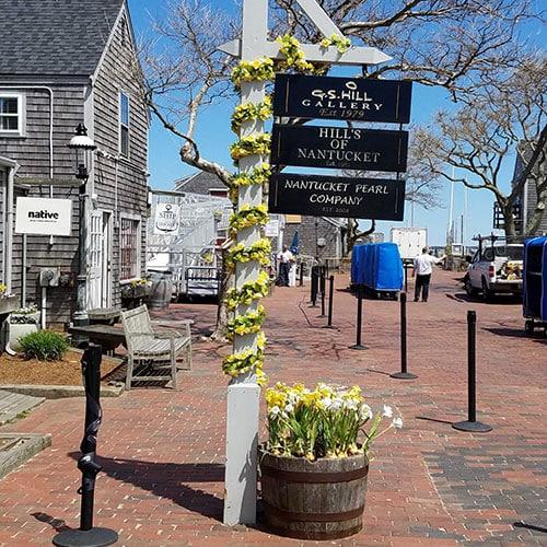 Daffodil Season   Nantucket, MA