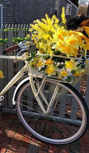 Daffodil Season | Nantucket, MA