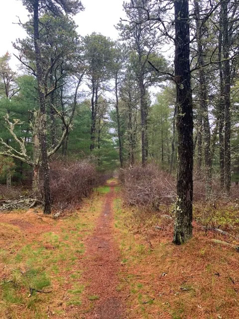 Morning Meditation in Nature - Maria Mitchell