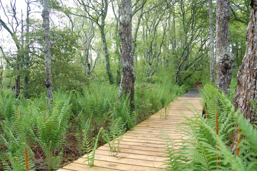 Stump Swamp/Norwood Farm