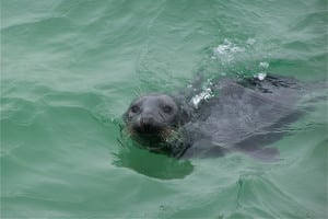 Shearwater Excursions Seal Cruise