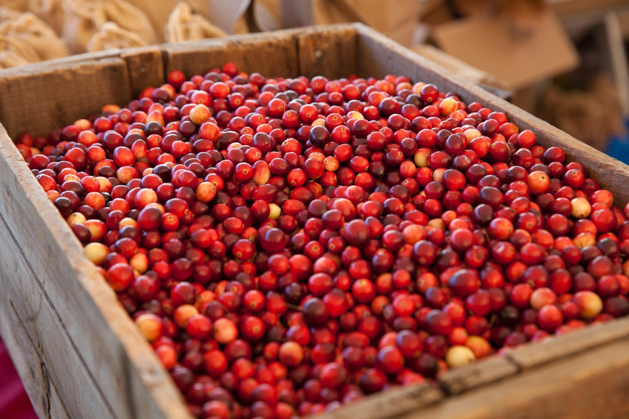 Cranberry Harvest Walking Tour